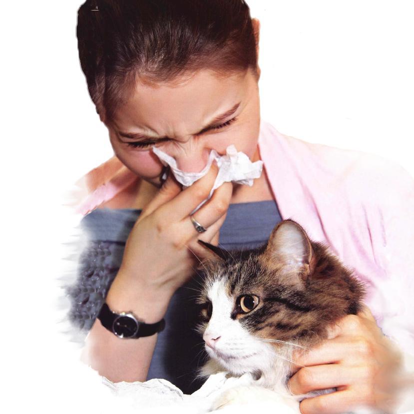постоянная аллергия на лице