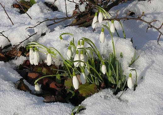 Как помочь организму весной