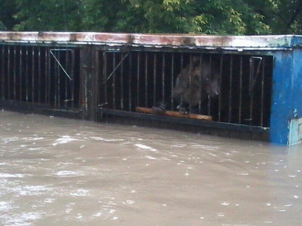 Из-за стихии в Уссурийске погибли животные зоопарка