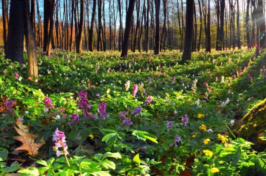 Исчезают типично лесные виды растений