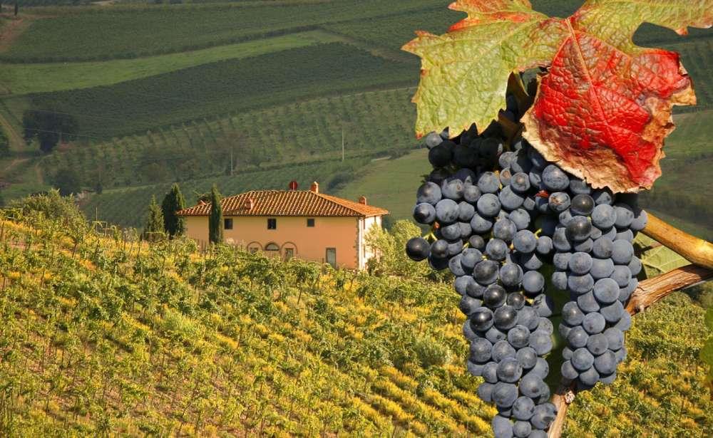 vino chianti classico caratteristiche abbinamenti e proprieta organolettiche