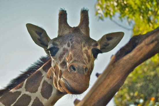 Как получить код на скидку в зоопарке Сакраменто