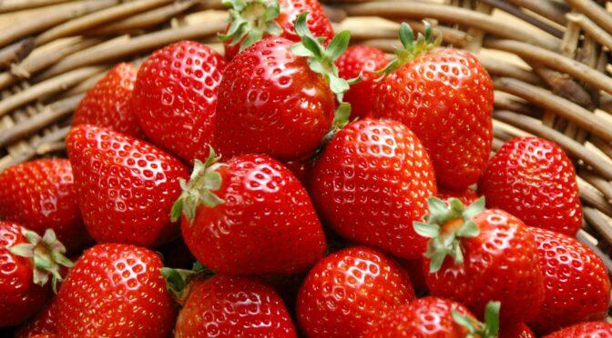 Купить свежую клубнику в спб, доставка свежей клубники – пора начинать клубничный сезон!